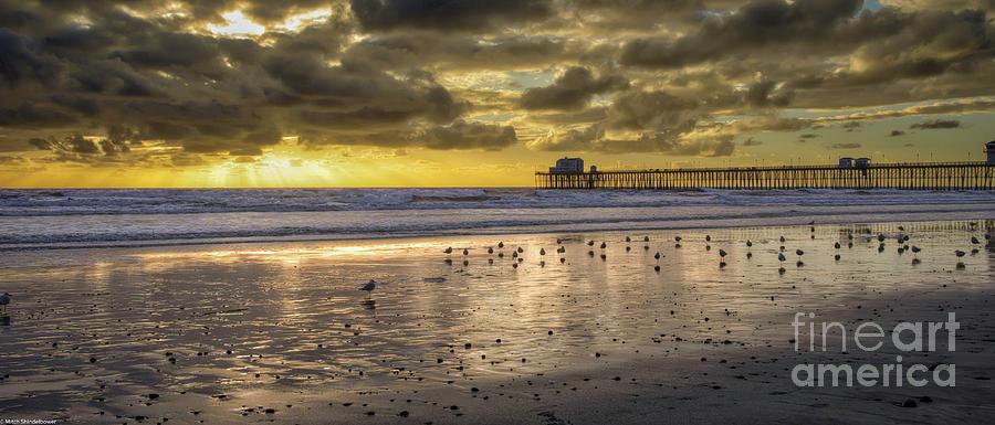 Shore Birds by Mitch Shindelbower