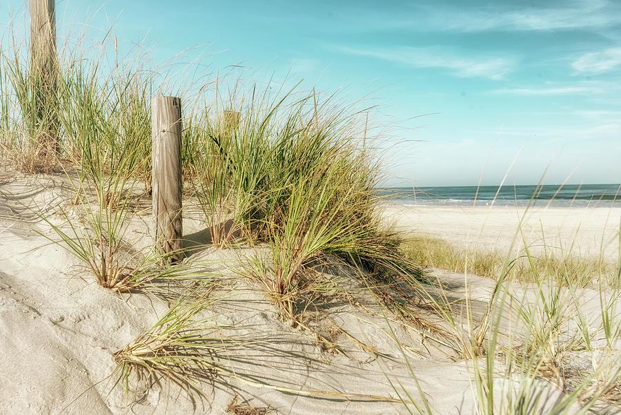 Shore Breeze  by Debra Fedchin
