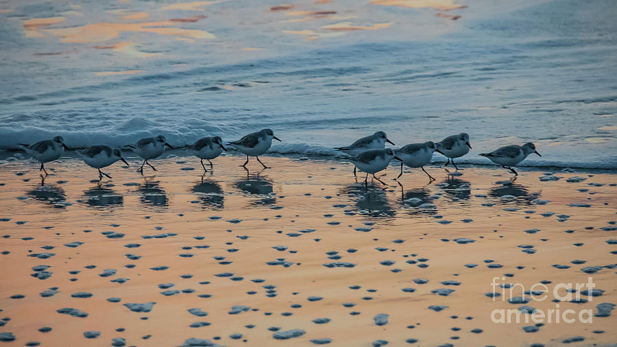 Shorebirds at Sunrise - Chincoteague NWR by John Greco