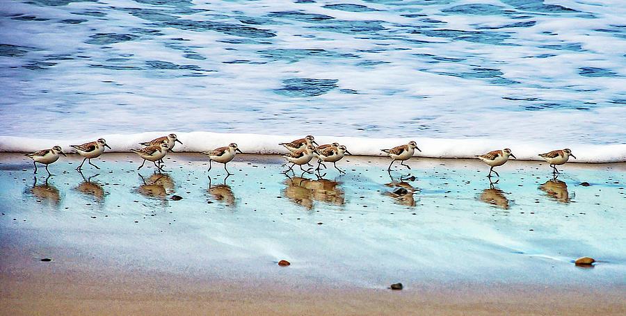 Shorebirds Photograph by Vanessa Mccauley