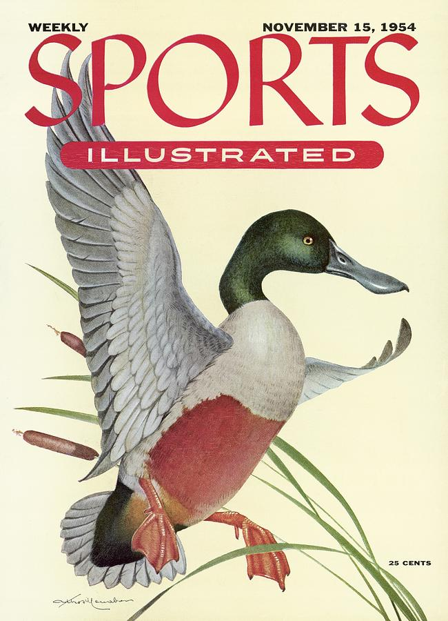 Shoveller Duck Sports Illustrated Cover Photograph by Sports Illustrated
