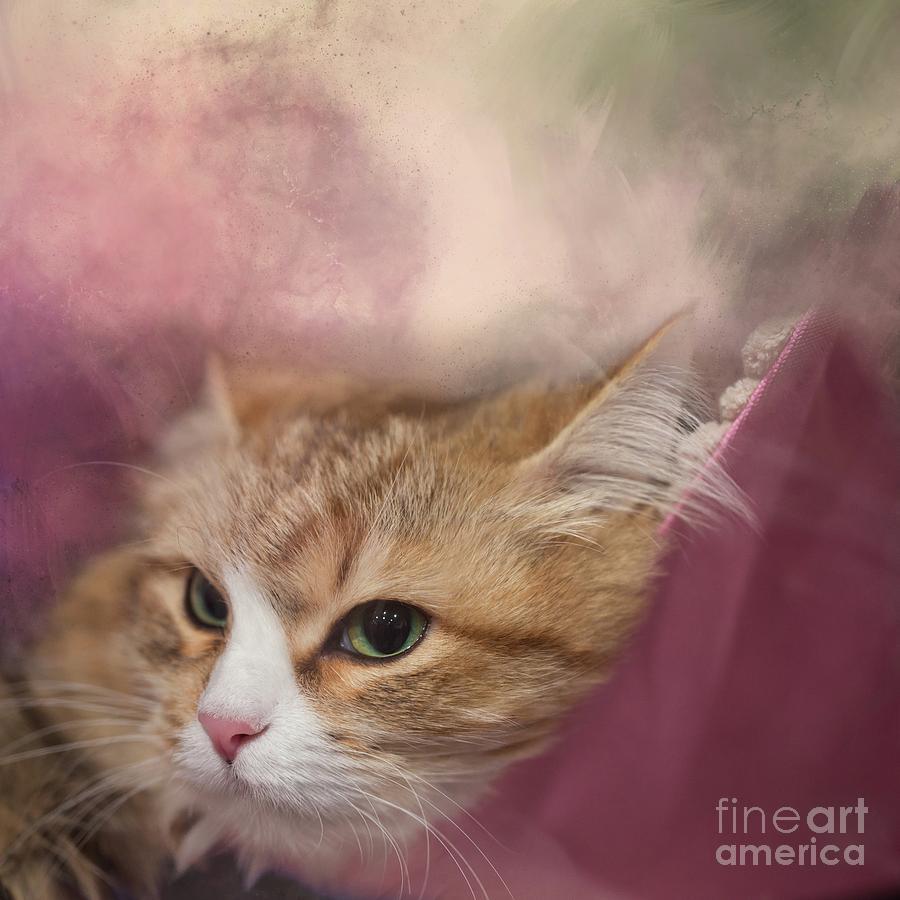 Siberian Cat by Eva Lechner