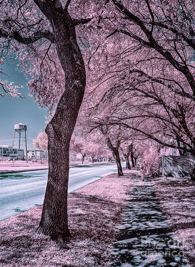 Sidewalk On Holcombe Infrared Photograph