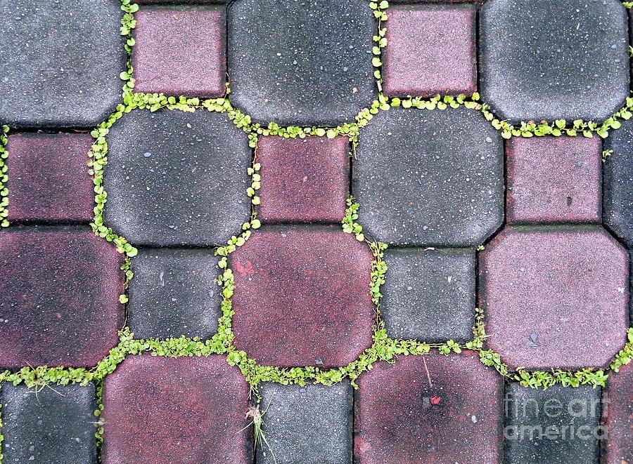 Sidewalk Tile Pattern by Yali Shi