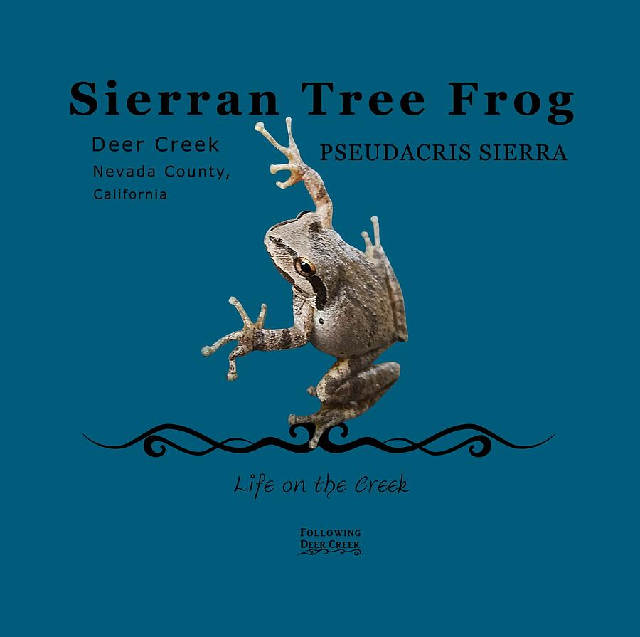 Sierran Tree Frog Pseudacris Sierra by Lisa Redfern