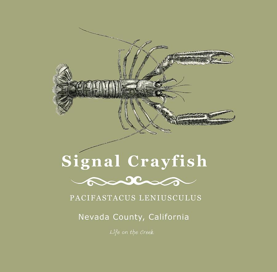 Crayfish Digital Art - Signal Crayfish by Lisa Redfern