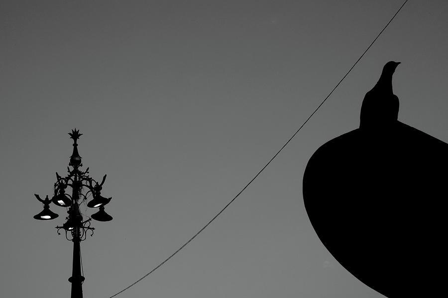 Signboard Bird Vs Street Lamp by Prakash Ghai