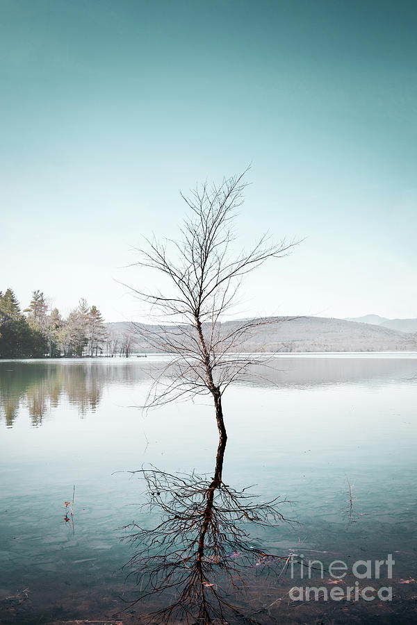 Silence Of A Lone Tree Photograph