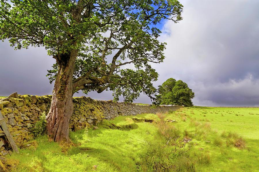 Silent Sentinel - Acharn Scotland - Drystane Dyke by Jason Politte