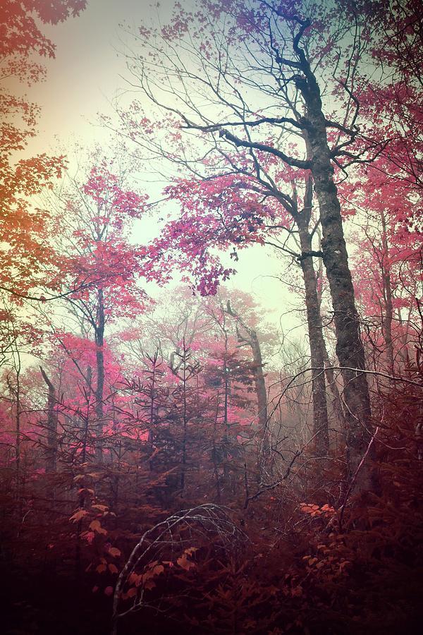 Silent Whispers by Tara Turner