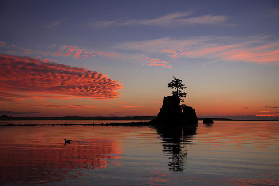 Siletz Bay Sunset With Gull by Mary Jo Allen