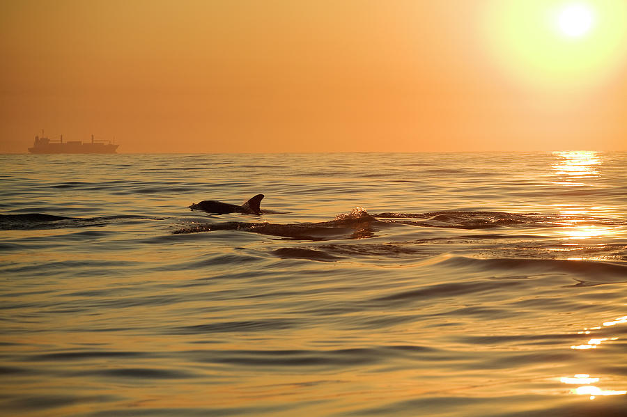 Silhouette Of A Bottlenose Dolphin And Photograph by Cormac Mccreesh