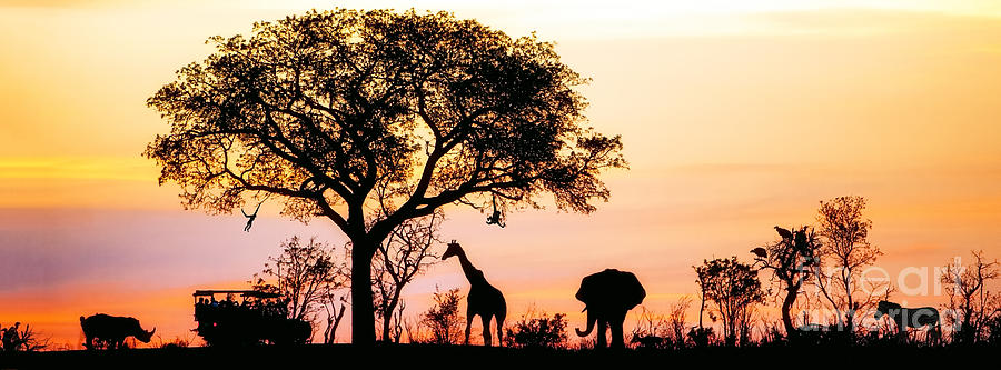 Big Photograph - Silhouette Of African Safari Scene With by Susan Schmitz