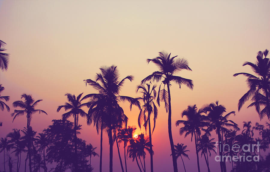 Palm Photograph - Silhouette Of Palm Trees At Sunset by Grop