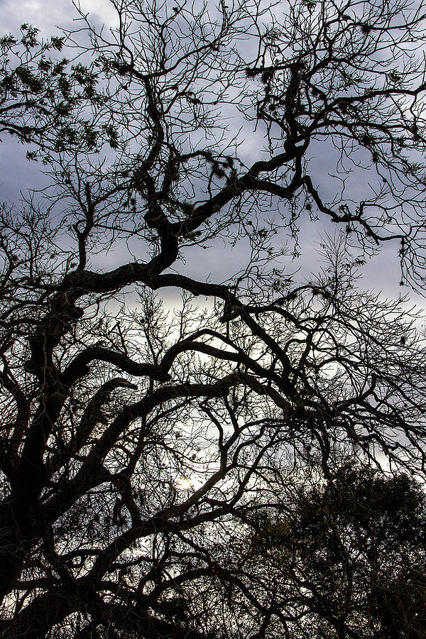 Silhouetted Branches  by Amy Sorvillo