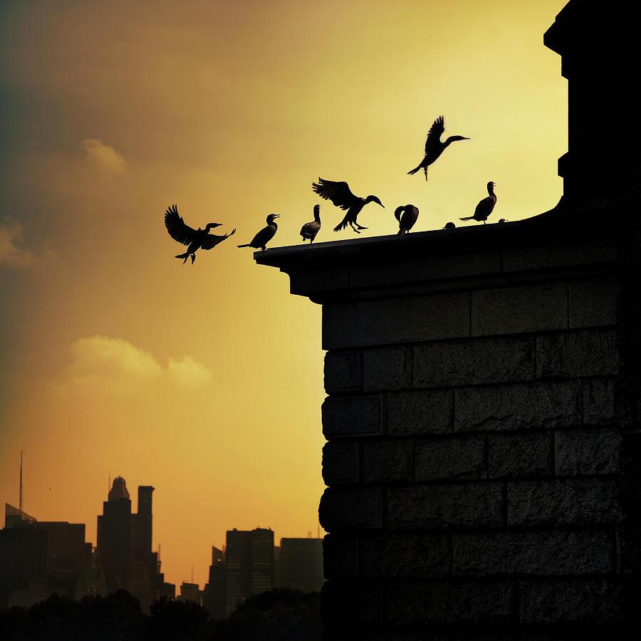 Silhouettes Of Cormorants Photograph by Istvan Kadar Photography