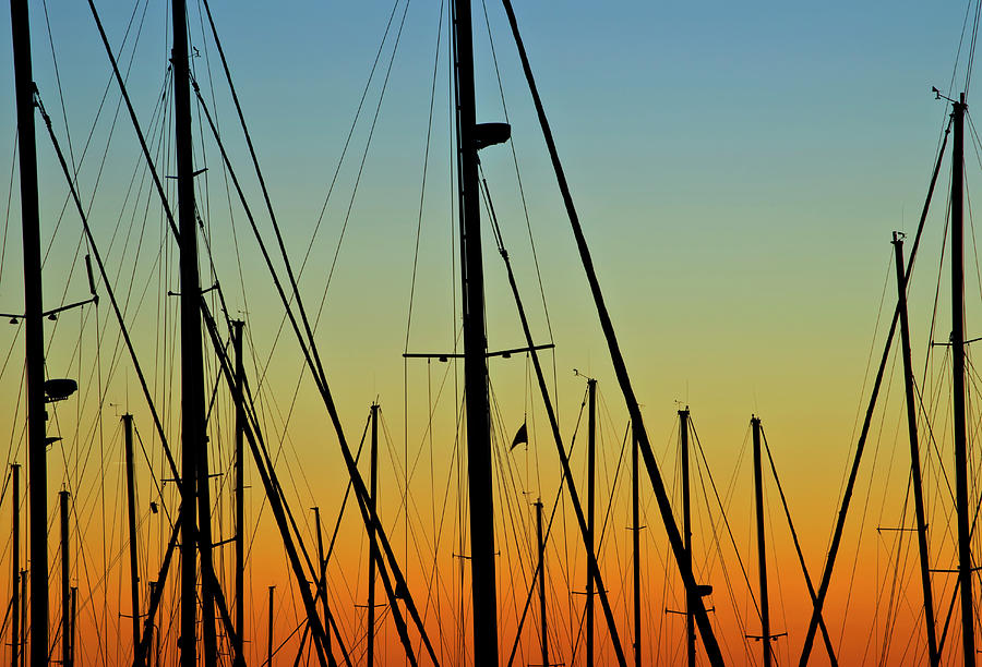 Silhouettes Of Sail Boat Masts And Photograph by Joseph Shields