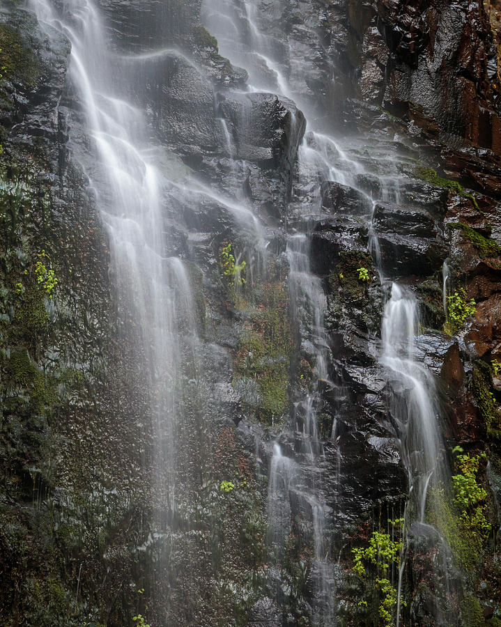 Silky Waterfall by Catherine Avilez