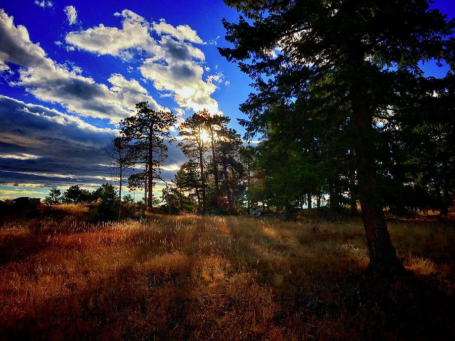 Silver Fox Trail by Dan Miller