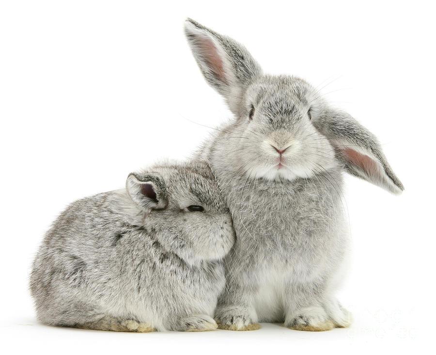 Silver Love Bunnies by Warren Photographic