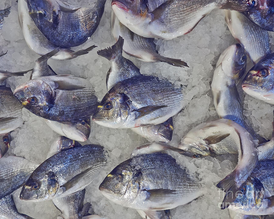 Tray Photograph - Silver Sea Bream For Sale At The by Dimitrios