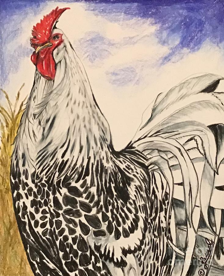 Silver Spangled Hamburg Rooster, Coloured by Laurel Adams