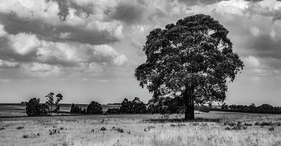Simple Contrasts, A Black and White Landscape by Marcy Wielfaert
