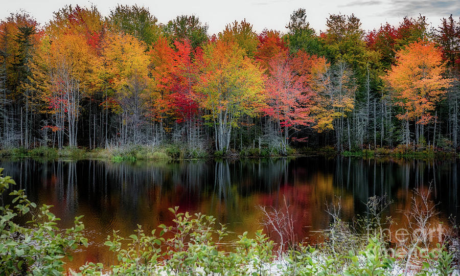 Simple Fall Beauty by Susan Garver