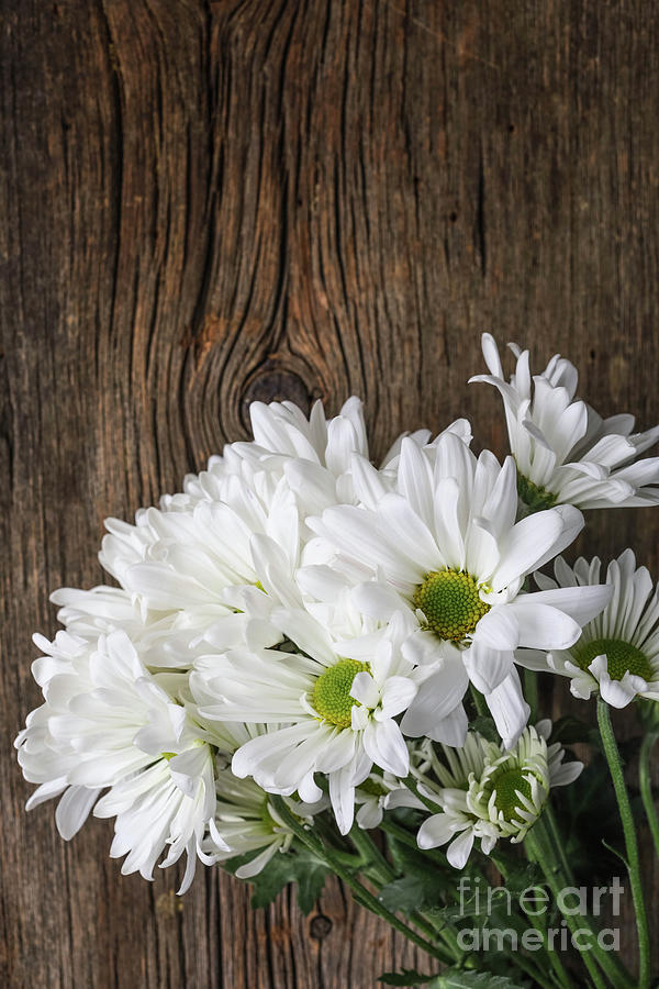 Simple White Flowers over Wood by Edward Fielding
