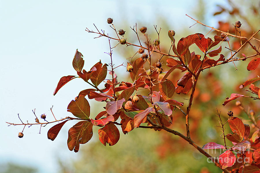 Simply Autumn by Kaye Menner by Kaye Menner