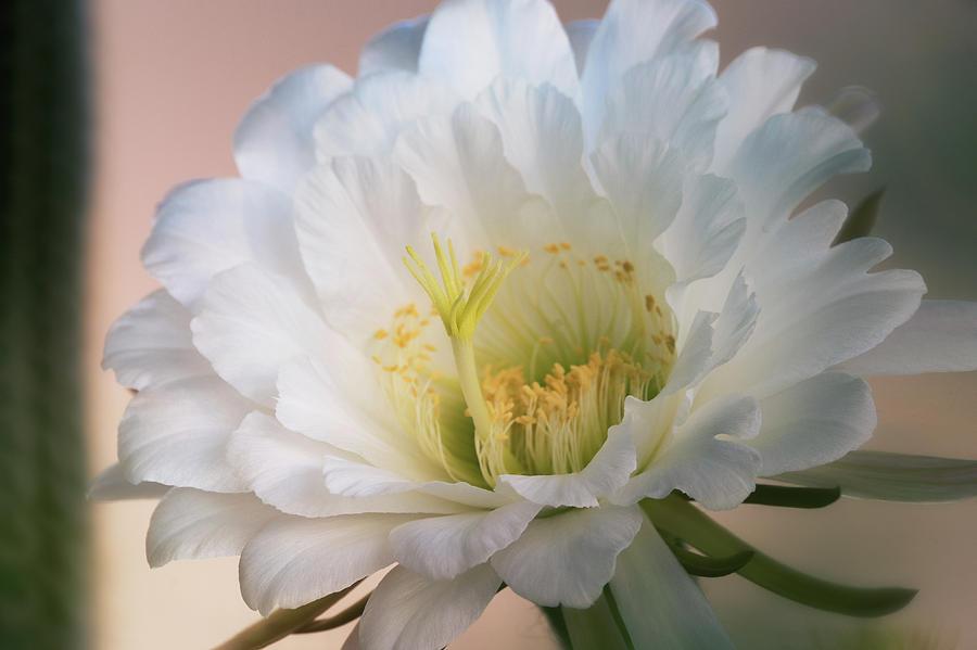 Simply White  by Saija Lehtonen