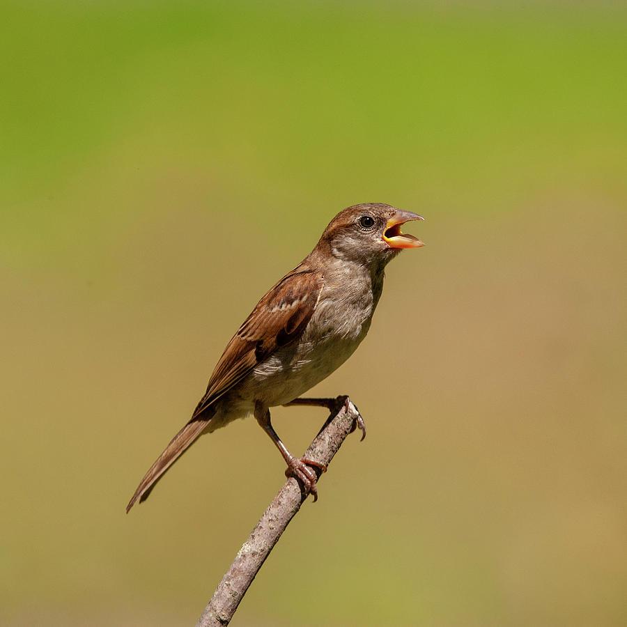 Singing Song Bird by Cathy Kovarik