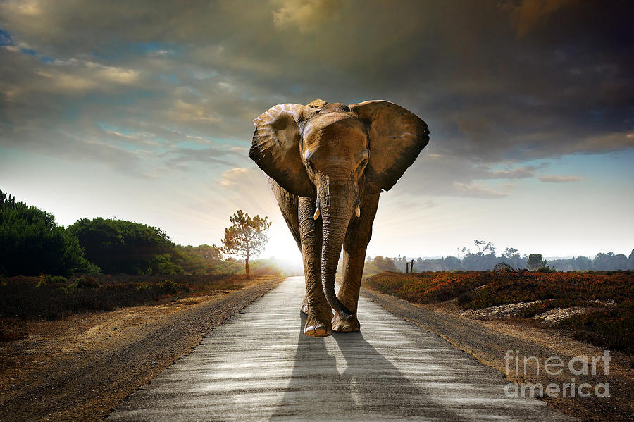 Big Photograph - Single Elephant Walking In A Road With by Carlos Caetano