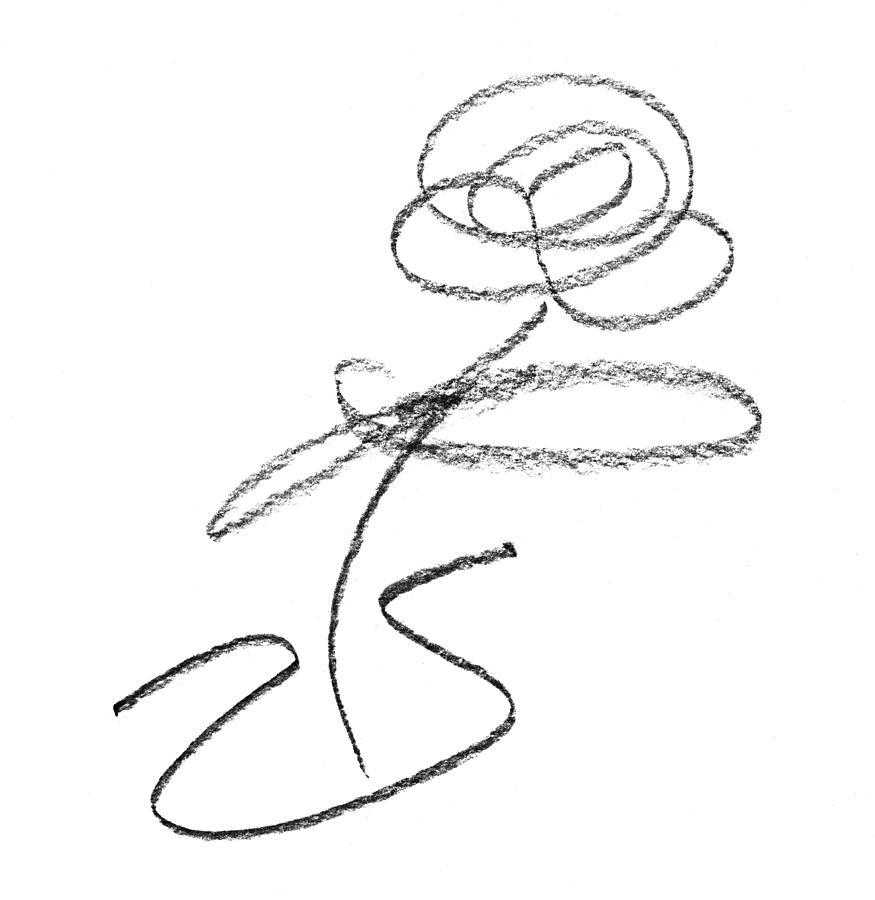 Single drawing single flower in vase pencil sketch by steve clarke