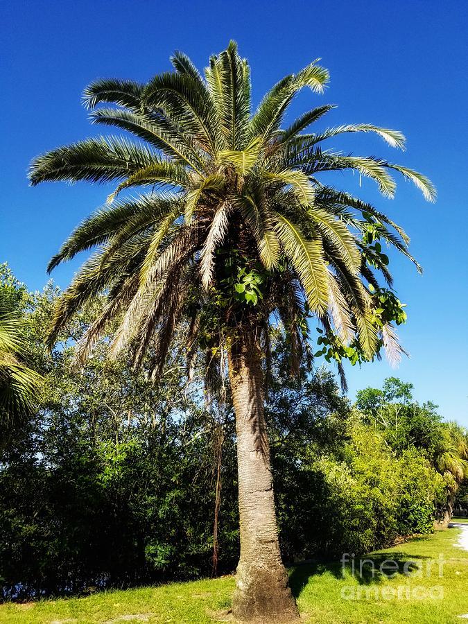 Single Palm Tree Color by Rachel Hannah