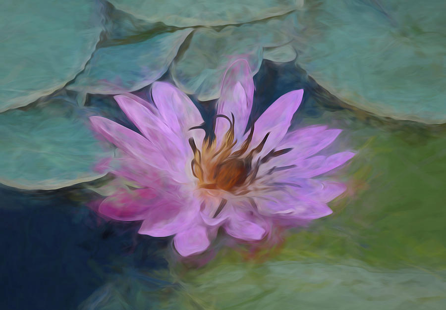 Single Pink Water Lily by Pamela Walton
