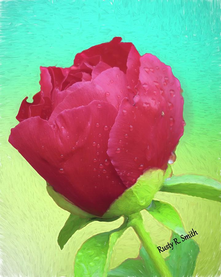 Single Red Rose by Rusty R Smith