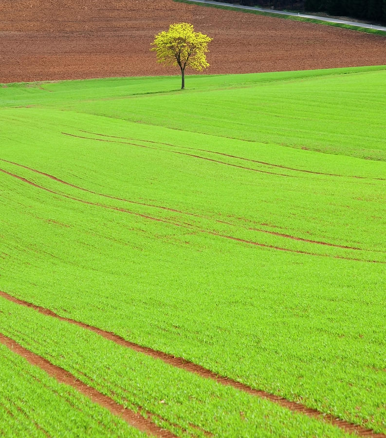 Single Tree In Green Field Photograph by Henglein And Steets