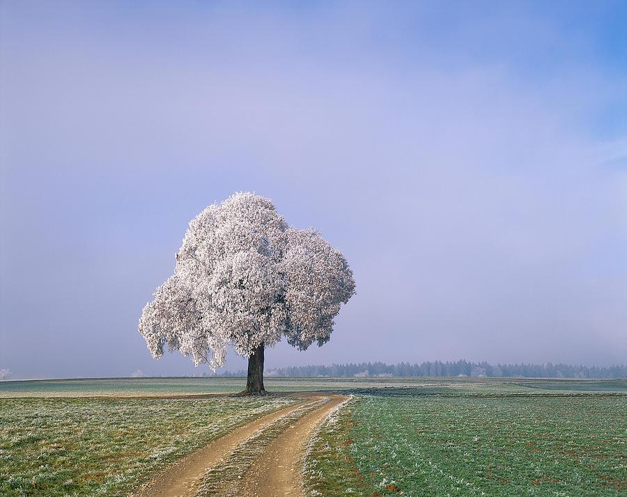 Single Tree Next To Dirt Tracks, Canton Photograph by Hiroshi Higuchi