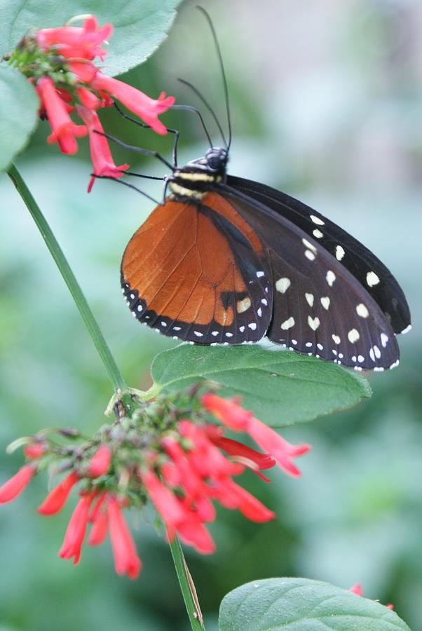 Sipping Nectar by Stephanie Pieczynski