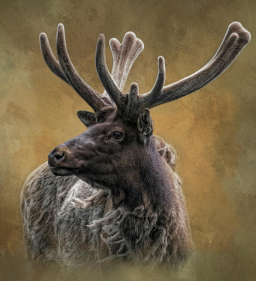 Sir Elk by Kelley Parker