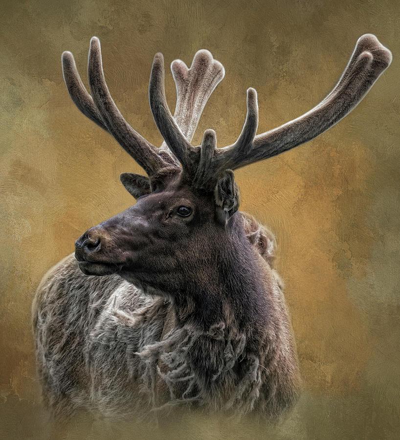 Sir Elk by Kelley Parker
