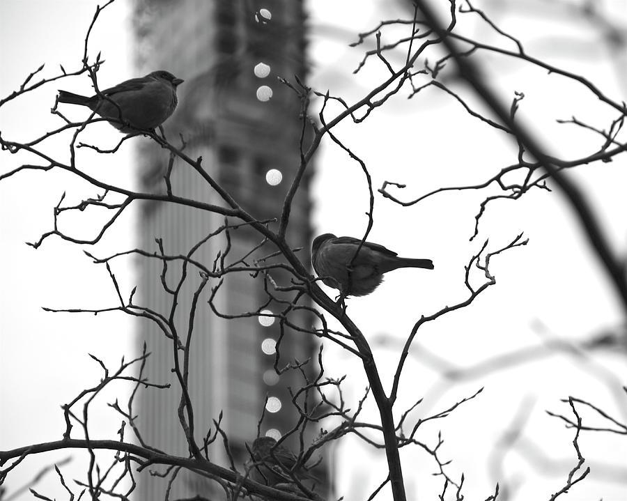 Sitting in a Tree by Corinne Rhode