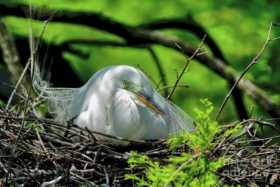 Sitting On The Nest by Kathy Baccari
