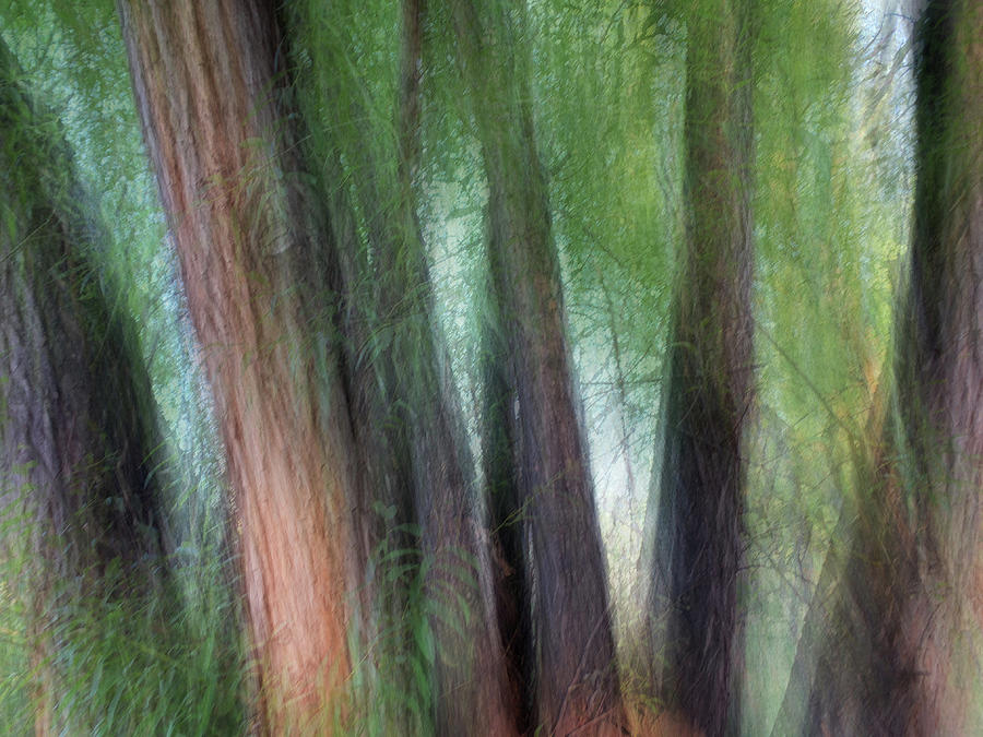 Six Trees by Marilyn Hunt