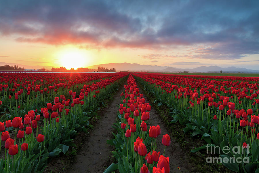 Skagit Valley Sunrise by Beve Brown-Clark Photography