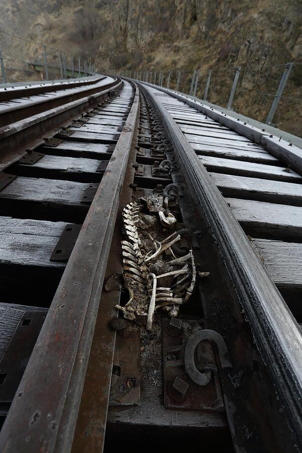 Skeletal by David Andersen