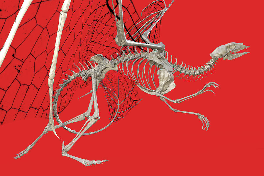 Dragon Digital Art - Skeleton Dragon With Red by Betsy Knapp