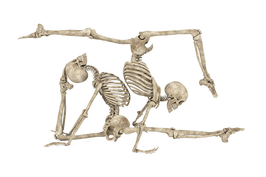 Skeleton Digital Art - Skeleton Yoga 004 by Betsy Knapp