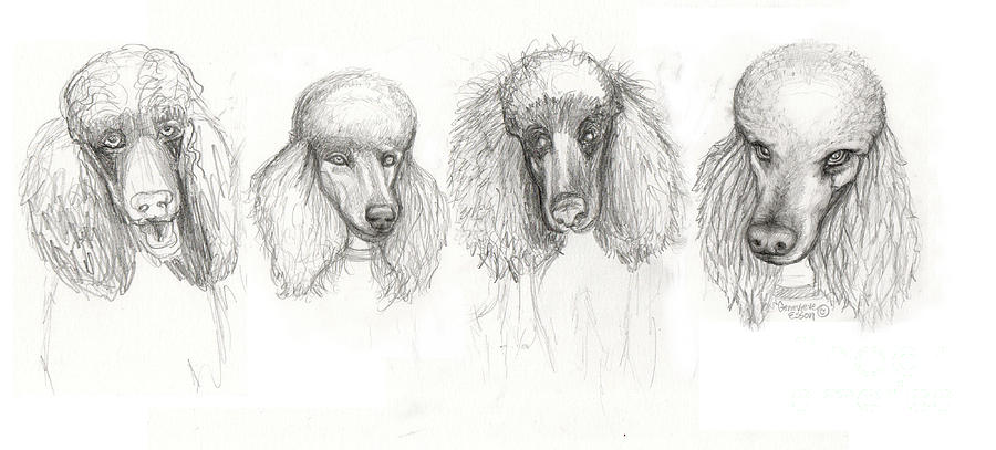 Sketch Of Four Poodles Drawing